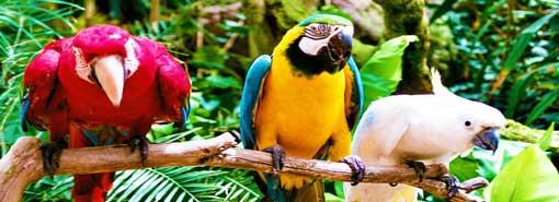 Oasis Park Parrot Show